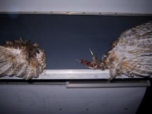 alpinewings